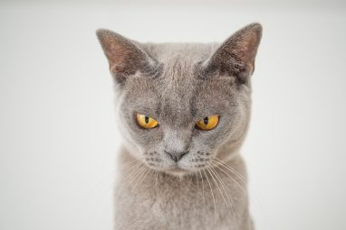 angry-animal-cat-1331821 (1)