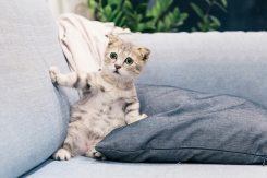 adorable-animal-cat-2194261