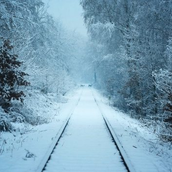 deer-on-snowfield-at-daytime-745499
