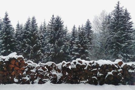 pine-trees-849412