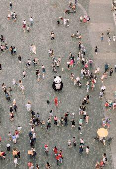 people-gathered-watching-a-panda-mascot-2346289