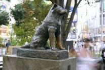 visit hachiko statue