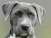 close-up-photography-of-adult-black-and-white-short-coat-dog-733416